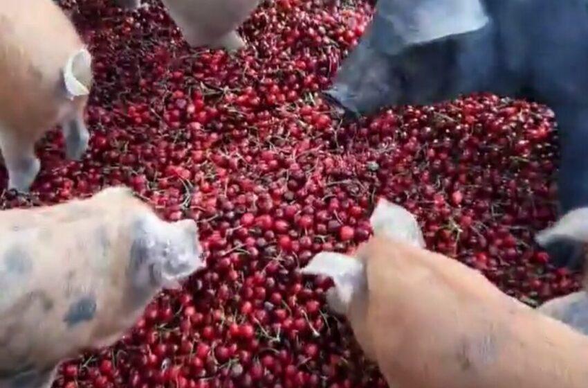 """Cia Puglia, """"pratiche sleali, è una svolta per gli agricoltori pugliesi"""""""
