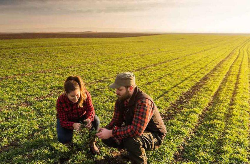Giovani agricoltori pugliesi resilienti, nonostante la pandemia aumentano i loro redditi